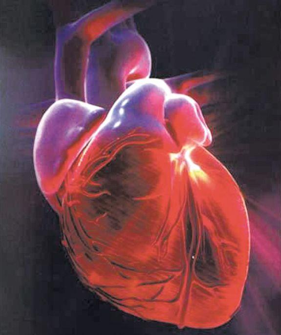 O diagnóstico das miocardiopatias baseia-se no exame clínico, eletrocardiograma e principalmente no ecocardiograma - Divulgação