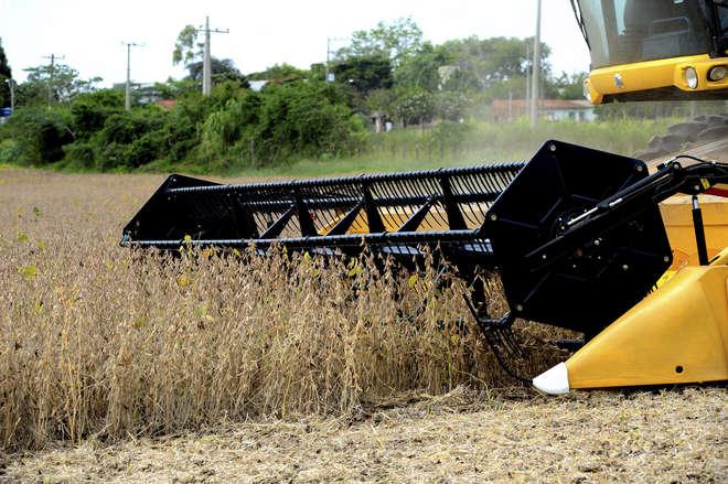 IBGE: culturas de inverno apresentam revisão de produção para baixo em 2017