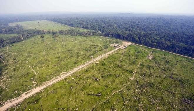 O Fundo Amazonas é alimentado pelos governos de Alemanha, Noruega e Reino Unido - AFP Internacional