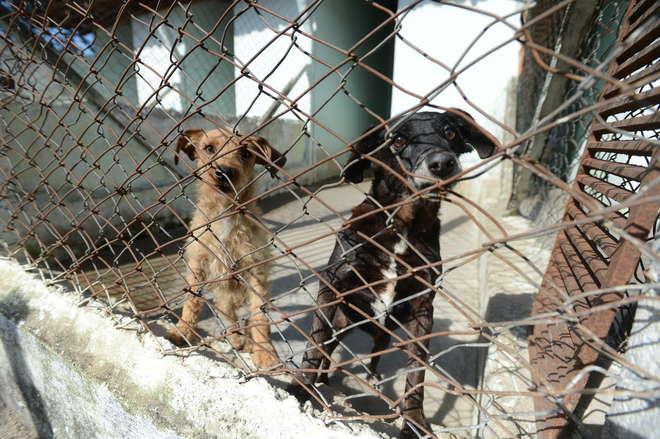A Spaso abriga atualmente 170 animais, entre cães e gatos - ERICK PINHEIRO