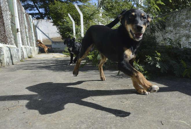 O abandono e os maus-tratos de animais domésticos são considerados crimes - ERICK PINHEIRO
