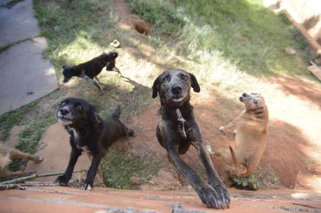 Entidades promove ações para adoção de cães e gatos - ERICK PINHEIRO