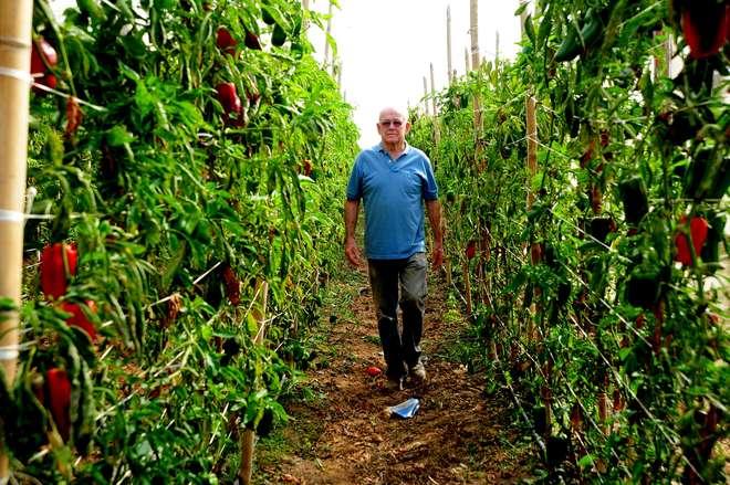 A estiagem reduziu em 50% a quantidade de legumes e verduras, segundo Adilson Sampaio - EMIDIO MARQUES