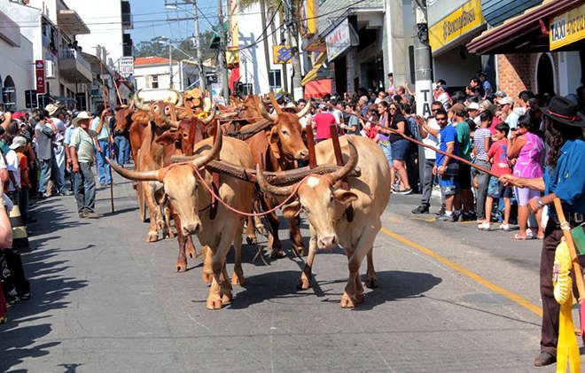 Entrada dos Carros de Lenha abre festividades do 361° aniversário de São Roque, neste domingo (5) - REPRODUÇÃO: FACEBOOK